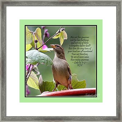 Sparrow Inspiration From The Book Of Luke Framed Print by Catherine Sherman