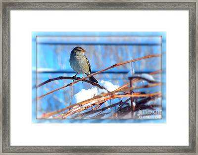 Framed Print featuring the photograph Sparrow On Grapevine by Heidi Manly