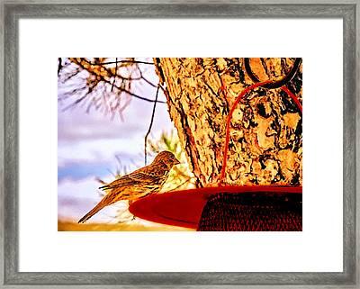 Sparrow Pine Tree Feeder Framed Print by Bob and Nadine Johnston