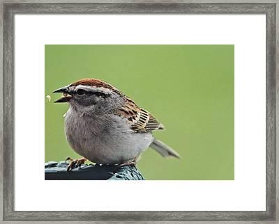 Sparrow Snack Framed Print