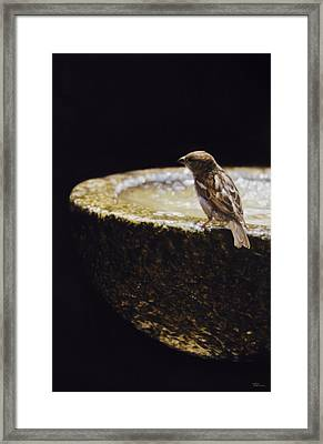 Sparrow With Fountain Framed Print by Alberto Ponno