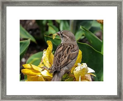 Sparrow Framed Print by Zina Stromberg