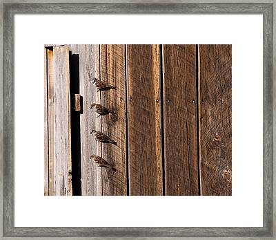 Sparrows Four  Framed Print