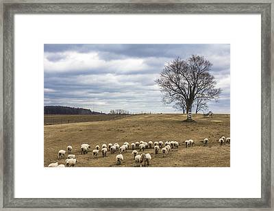 Spartan Tree Framed Print