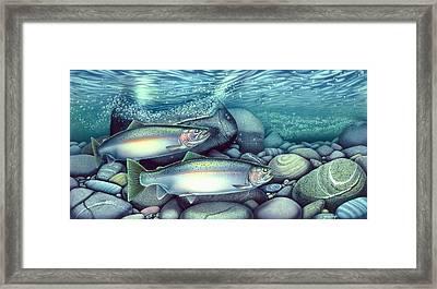 Spawning Steelhead Trout Framed Print