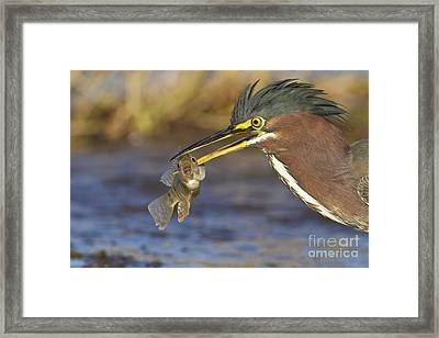 Framed Print featuring the photograph Speared by Bryan Keil