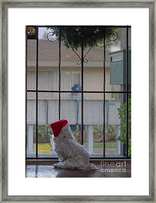 Special Delivery Framed Print by Andrea Auletta
