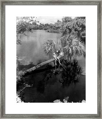 Special Fishing Spot Framed Print by Retro Images Archive
