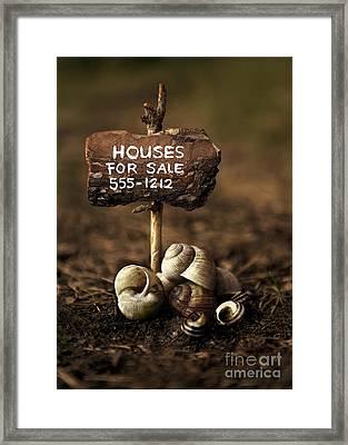 Special Offer Framed Print