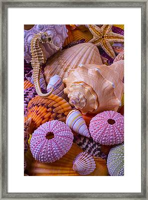 Special Shells Framed Print by Garry Gay