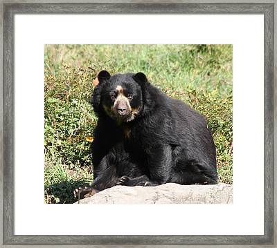 Speckled Bear Framed Print by John Telfer