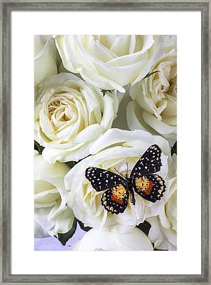 Speckled Butterfly On White Rose Framed Print