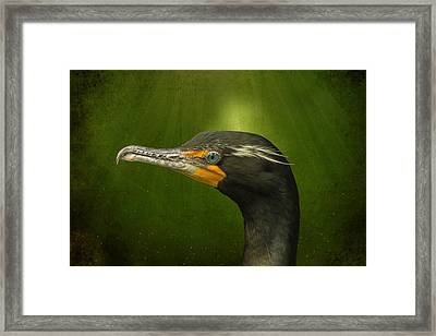 Speckled Cormorant  Framed Print by Bill Tiepelman