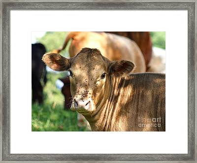 Speckled Shade Framed Print