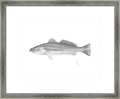 Speckled Trout - Scientific Framed Print