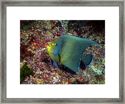 Speckles Framed Print by Jean Noren