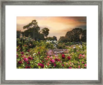 Spectacle Of Roses  Framed Print