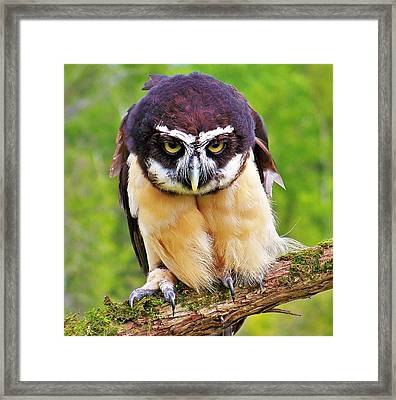 Spectacle Owl Framed Print