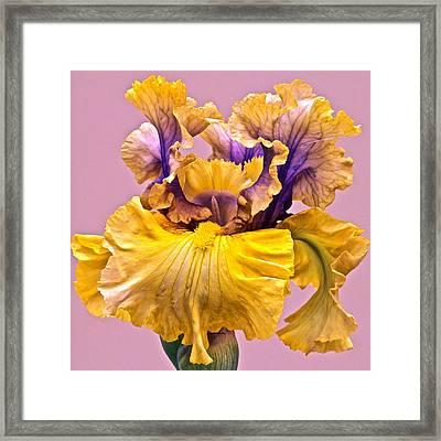 Spectacular Iris Close Up Framed Print
