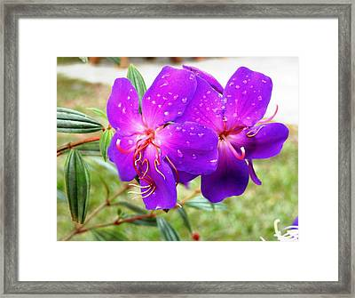 Spectacular Morning Dew Framed Print by Belinda Lee