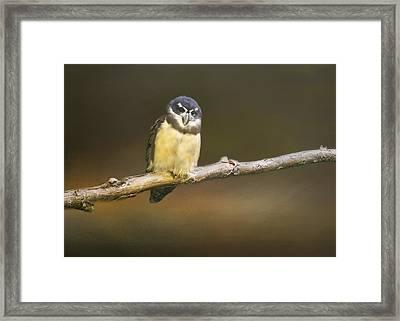 Spectacled Owl  Framed Print