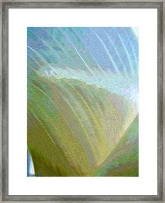 Spectrum Calla Lily  Framed Print