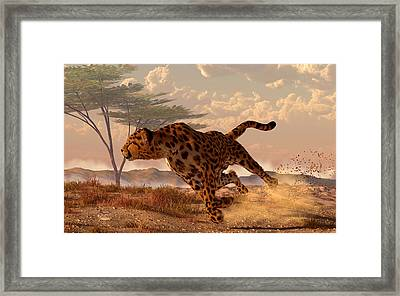 Speeding Cheetah Framed Print by Daniel Eskridge