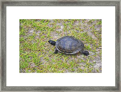 Speedy Slider Framed Print by Al Powell Photography USA