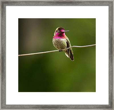 Speedy Slows Down Framed Print by Jean Noren
