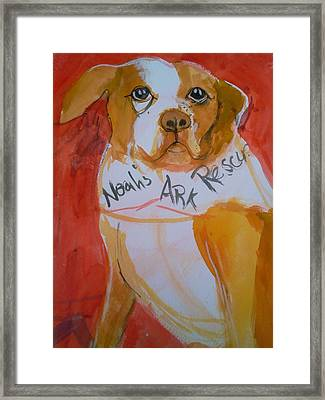 Framed Print featuring the painting Spencer The Pit Bull by Gertrude Palmer