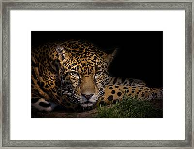 Spender Framed Print