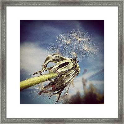Spent Wishes... Framed Print