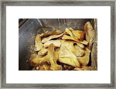 Sperm Whale Bone Preparation Framed Print