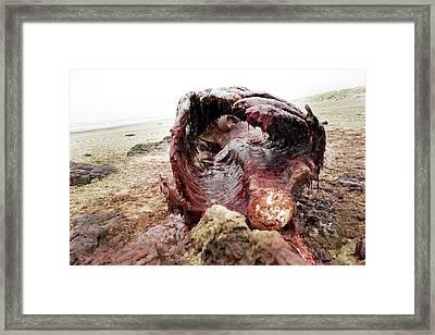 Sperm Whale Carcass Framed Print