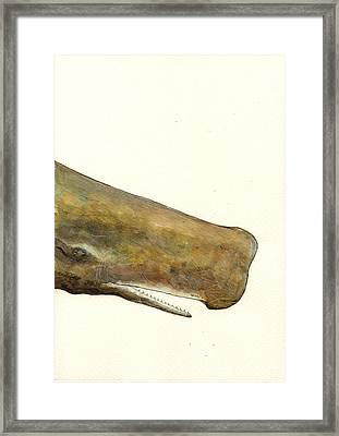 Sperm Whale First Part Framed Print by Juan  Bosco