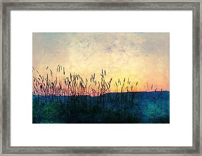 Spighe Framed Print
