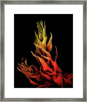 Sphagnum Moss Framed Print by Louise Hughes