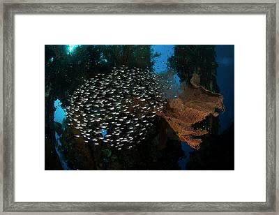 Spherical School Of Sweeper Glass Fish Framed Print