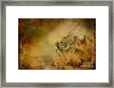 Spices From A Million Flowers Framed Print