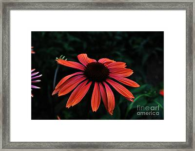 Spicy Framed Print by Judy Wolinsky