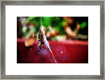 Spider And Web Framed Print by Adam LeCroy