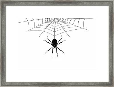 Spider And Web Framed Print by Ludek Sagi Lukac