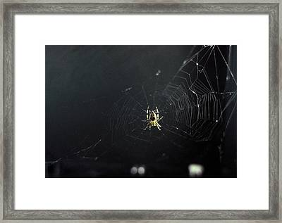 Spider And Web Woven In Zero Gravity Framed Print