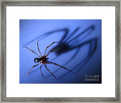 Spider Blue Framed Print by Jennie Breeze