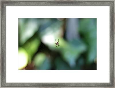 Spider Bokeh Framed Print