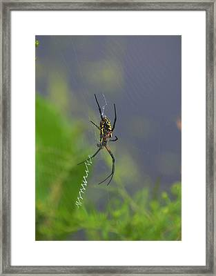 Spider By Pond - 165a2 Framed Print by Paul Lyndon Phillips