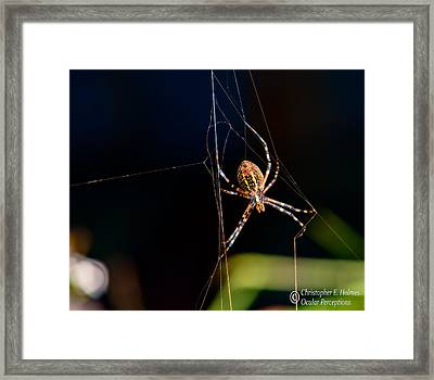 Spider Framed Print by Christopher Holmes