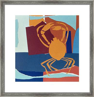 Spider Crab Framed Print by John Wallington
