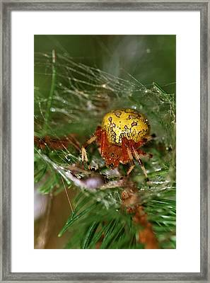 Spider Framed Print by Dan Sproul