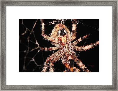 Spider - Hairy Framed Print